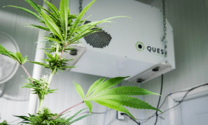 is dehumidifiers are safe for plants?